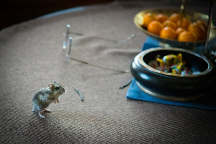 High angle view of mouse on table