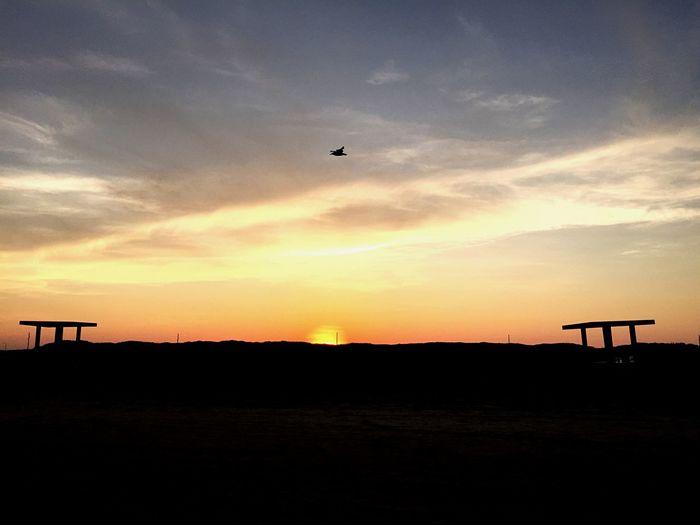 Capturing Freedom Birds Sunset Vacation Beach Dusk Travel Silhouette Sunset Silhouettes