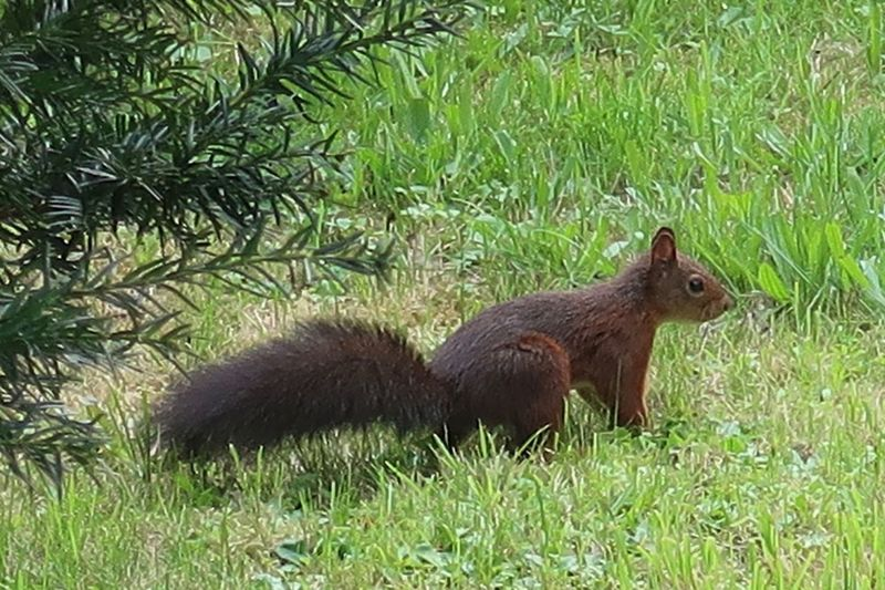 Squirrel Eichhörnchen Animal Themes Animal Plant Animal Wildlife Grass Mammal Animals In The Wild Nature One Animal Green Color Vertebrate No People Outdoors Rodent Land Day Field Growth Tree Grass Area