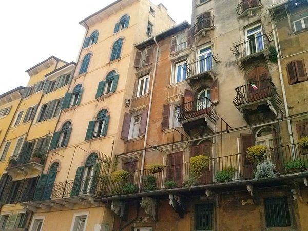 Bella Italia Buildings City Dog Firenze Garda Lake Humor Mountains And Sky