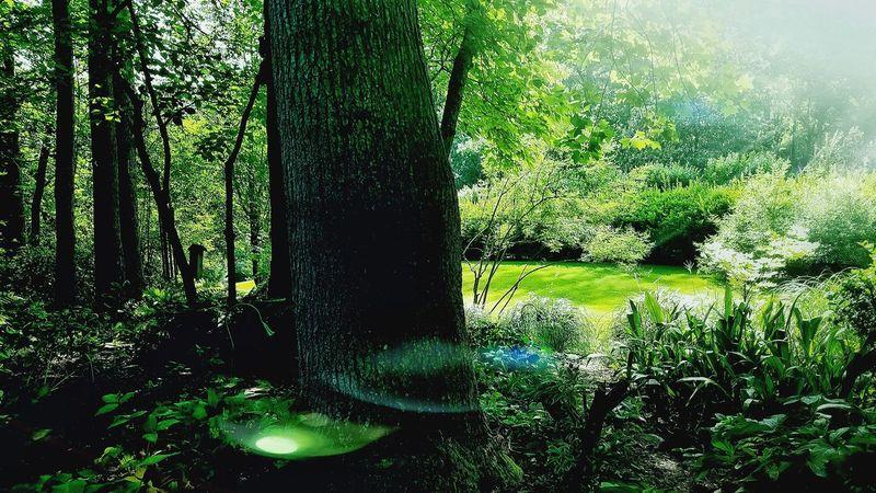 The Secret Garden. Inverness House Roswell, GA Tree Nature Outdoors Sunlight Shadow Grass Garden Photography Garden Serenity