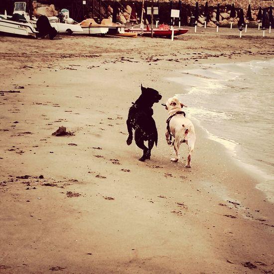 Love is in the air Mydog MyJoy Sea Beach