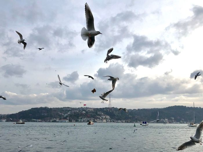 hear the seagulls Bosphorus Seagulls Seagull EyeEm Gallery Istanbul Sky And Clouds Eye4photography  EyeEm Best Shots Flying Sky Cloud - Sky Vertebrate Animal Animals In The Wild Animal Themes Bird Nature Animal Wildlife Flock Of Birds Group Of Animals Day Sea Analogue Sound