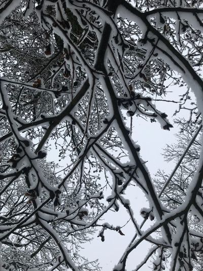 Low Angle View Tree Day Branch Outdoors No People Nature Plant Growth Sky Close-up