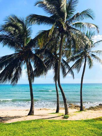 Sea Palm Tree Tree Beach Water Beauty In Nature Scenics Nature Horizon Over Water Day Tree Trunk Tranquility Outdoors Tranquil Scene No People Sand Sky Grass Wave Jamaica Montego Bay Jamaica