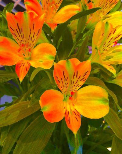 Winter Flowers EyeEm Nature Lover Flower Collection Loving Flowers Flowers