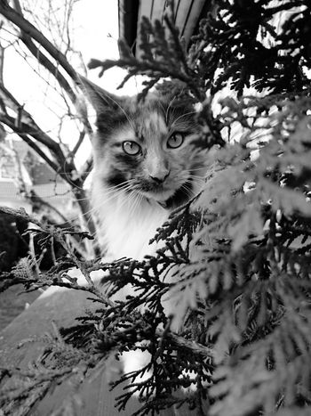 One Animal Tree Animal Themes Mammal Nature Looking At Camera Branch No People Plant Animals In The Wild Outdoors Pets Animal Eye Day Portrait Feline Domestic Animals Close-up Leopard Neu Wulmstorf Monochrome Photography MarieTheCat Meisterweg Beauty In Nature Sunnyday☀️ Perspectives On Nature Black And White Friday