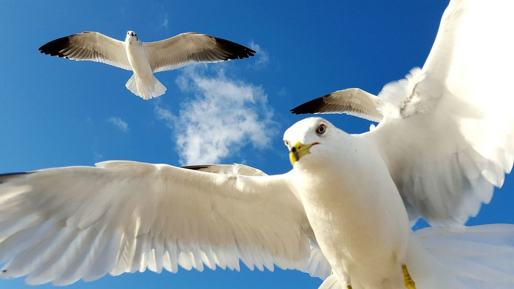 Ocean Breeze Sunrise Windy Day Surf Romantic SEAGULL IN FLIGHT Beach Photography Waves, Ocean, Nature Seagulls And Sea Gliding Drifting Away Take Flight! Drift Soaring Surfing Beach Life Enjoying Life Romance Romantic❤ Ocean Oceanlife Check This Out Animals Flying Bird Bird Photography