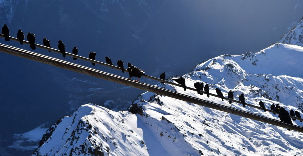 Alps Birds Cold Temperature Day Mountain Outdoors Snow Snow Covered Winter Wires