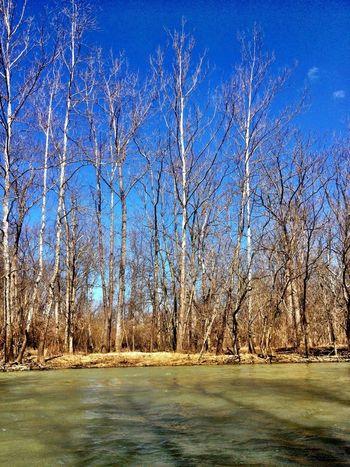 Trees NEM Landscapes Metro Parks