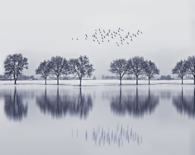 Birds flying over lake against sky