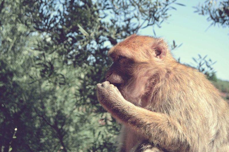 Nature Animal Themes Outdoors Life Park Photography Photographer Work Travel Tourism Greece