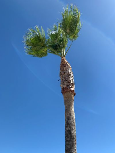 Mexico Vacation EyeEm Selects Sky Tree Low Angle View Plant Blue Nature Tropical Climate Palm Tree