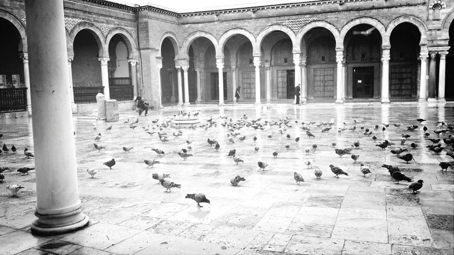 EyeemMedina Mosquée Zitouna Centre Ville De Tunis What I Want To Shoot With A 360 Panono Camera That would be more wonderful...