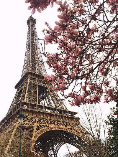 Paris Hello World Spring Flowers Spring Springtime Aiffeltower Hi! Relaxing Taking Photos UrbanSpringFever