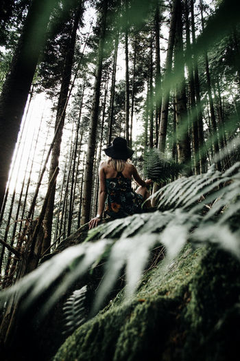 Low angle view of woman sitting on rock seen through plants at forest