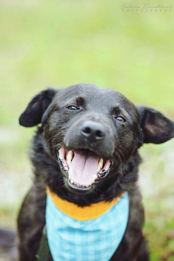 Floyd from the shelter Dog Nature Smile Portrait Animal Adorable Shelter Photography Cute
