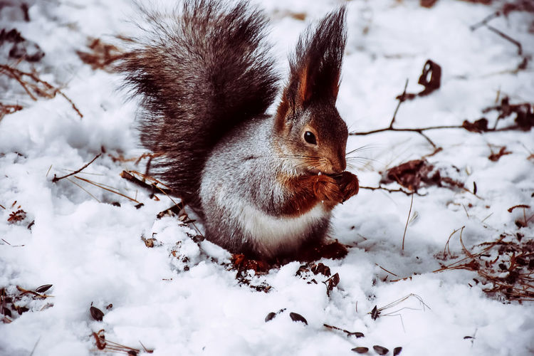 Animal Photography Animal Themes Animals In The Wild Animals In The Wild Close-up Cold Temperature Day Mammal Nature No People One Animal Outdoors Snow Tree Winter