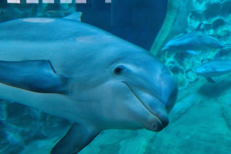 Well, hi there! Dolphin Animal Themes Underwater Swimming Beauty In Nature Sea Life Aquarium 365project