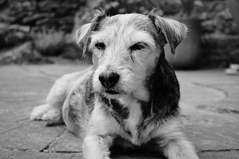EyeEm Animal Lover EyeEm Nature Lover Captured Moment Monochrome Blackandwhite Pose Dog Dogs Hello World Cheese!