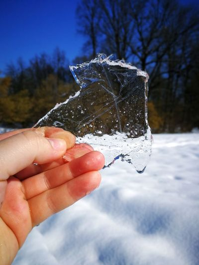 Ice ice Ice Shades of Winter EyeEmNewHere Human Body Part Human Hand One Person Cold Temperature Water Winter Holding Refreshment Close-up Tree Snow Sky Outdoors Day