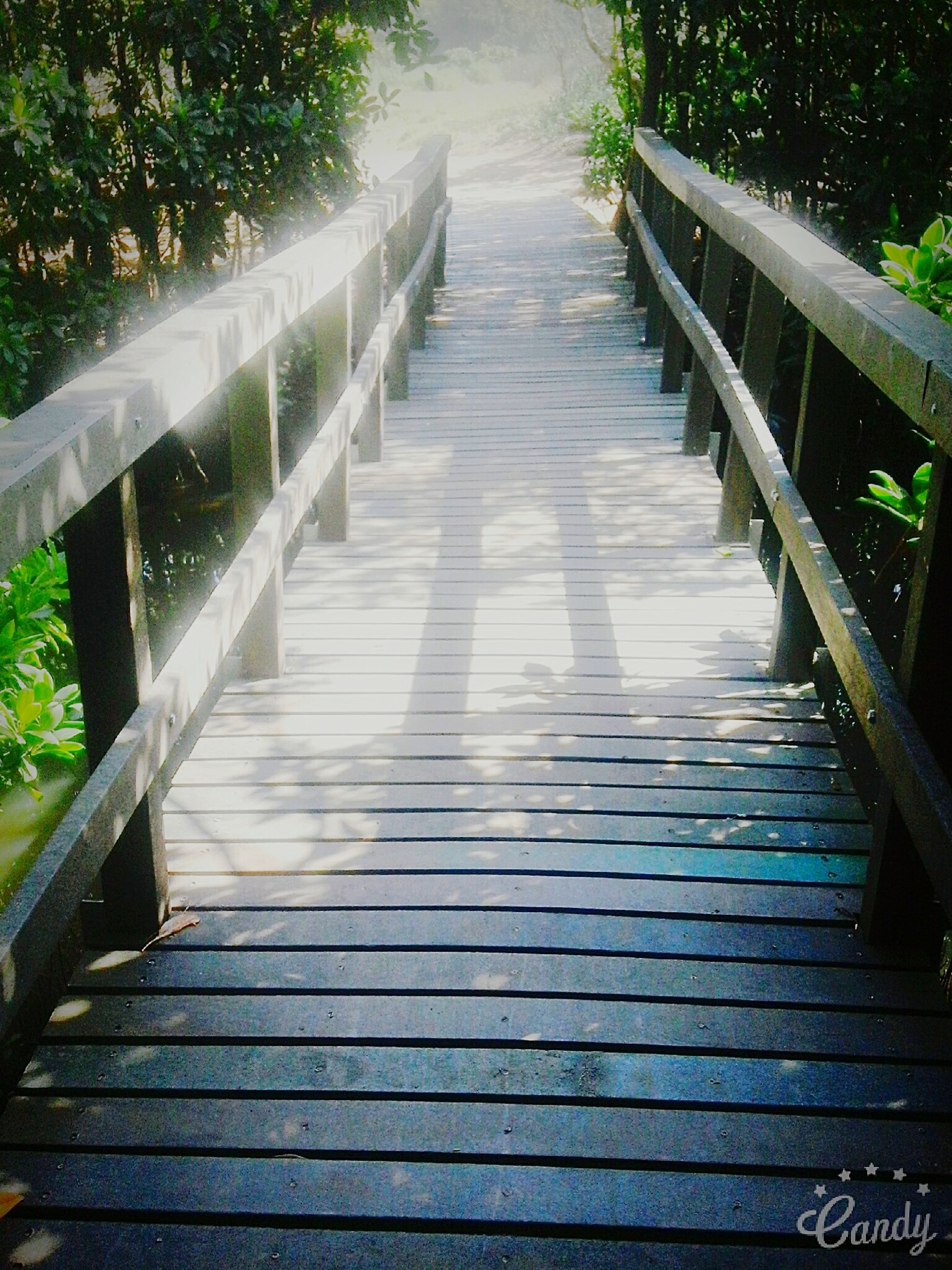 the way forward, railing, wood - material, boardwalk, footbridge, diminishing perspective, wooden, tree, wood, narrow, nature, day, growth, vanishing point, no people, plant, tranquility, empty, outdoors, walkway, beauty in nature