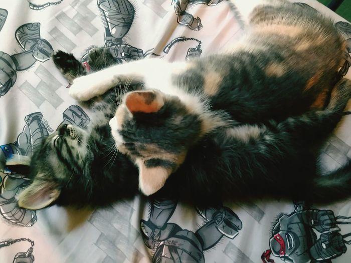 Huggers Love Cats 🐱