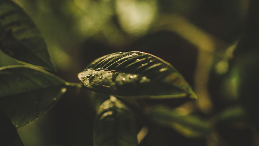 Close-Up Of Fresh Wet Green Plant