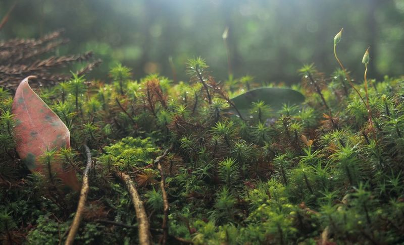 Beautiful Moss Beauty In Nature Close-up Day Grass Green Color Growth Japanese Temple Garden Kyoto Moss After Rain Mystical Forest Nature No People Outdoors Plant Red Leaf