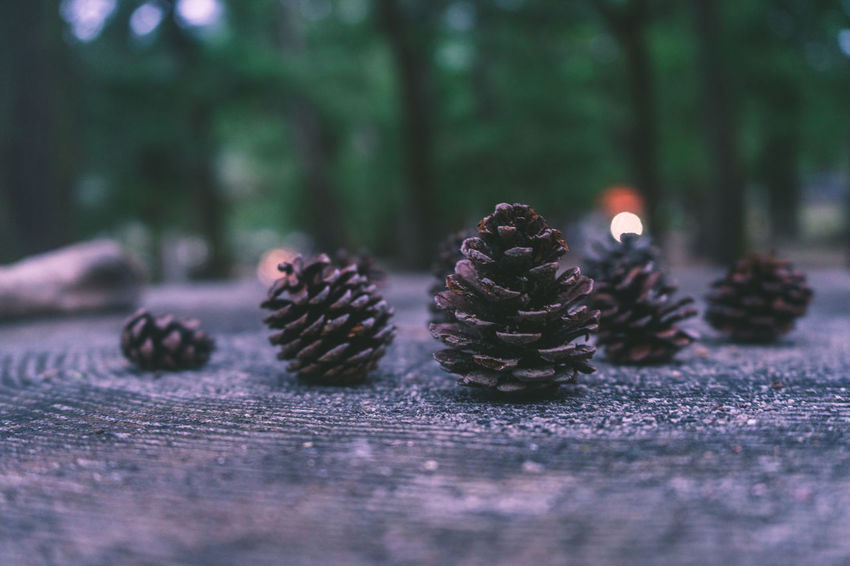 AMPt_community EyeEm EyeEm Best Shots Japan Brown Close-up Coniferous Tree Day Food Food And Drink Freshness Healthy Eating Nature No People Outdoors Pinaceae Pine Cone Pine Tree Plant Selective Focus Shootermag Shot Of The Day Still Life Surface Level Tree Wellbeing Wood - Material
