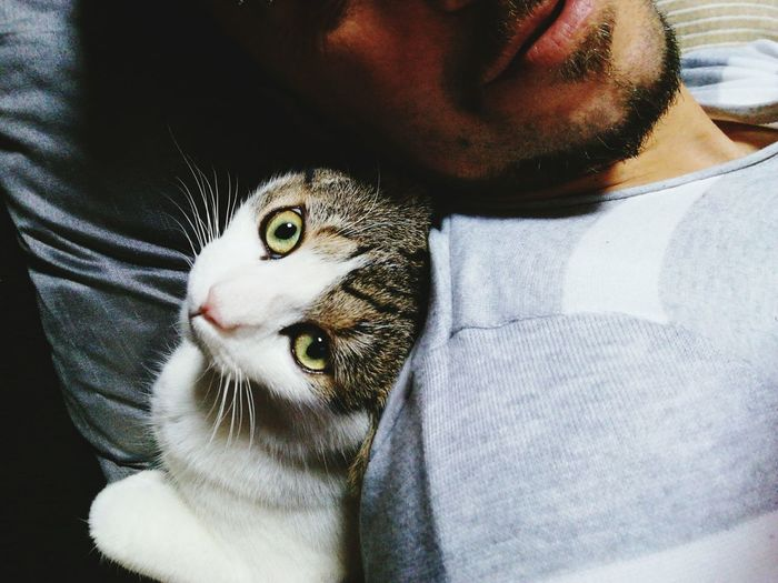 Cropped Image Of Man Lying With Cat At Home