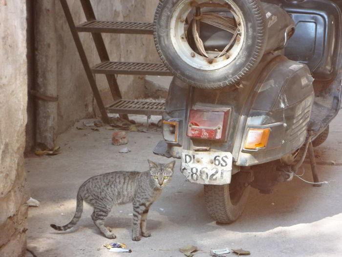 Cat India