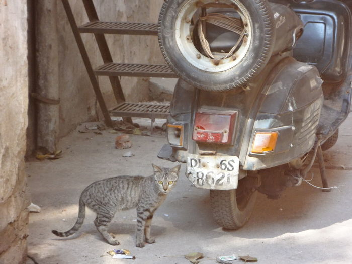 Cat Citylife