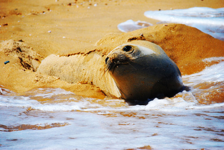 View of elephant seal