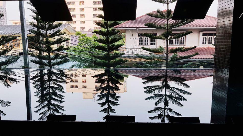 Bangkok Thiland Swimming Pool Narsis Architecture Building Exterior No People Tree City