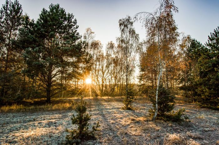 Tree Nature Winter Tranquil Scene Beauty In Nature Scenics Tranquility Cold Temperature Sunlight Forest Outdoors Landscape