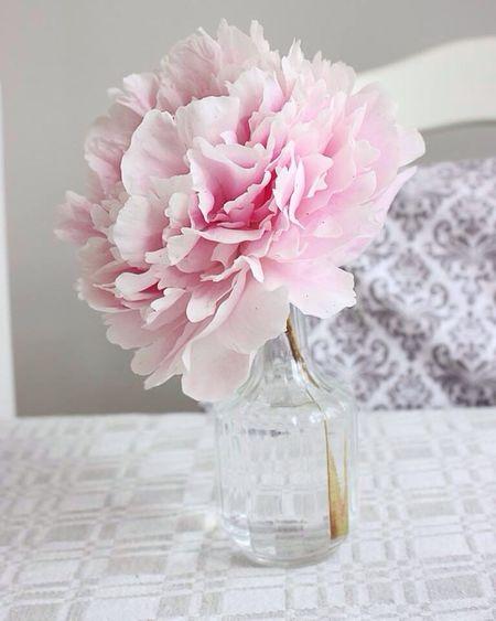 Flowers <3 Sweden Flower Kitchen Pion