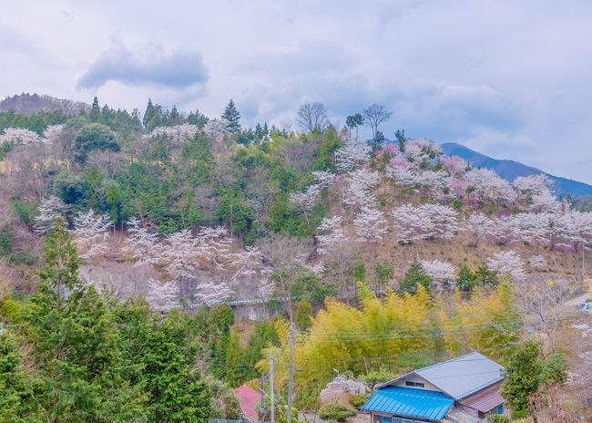 The route no. 20 of beautiful landscape in the Countryside of Yamanashi Japan Beauty In Nature Scenics Outdoors Cherry Blossoms Countryside Mountain Rural Scene 山梨県 桜 Seasonal Photography Japan Scenery ✨💫