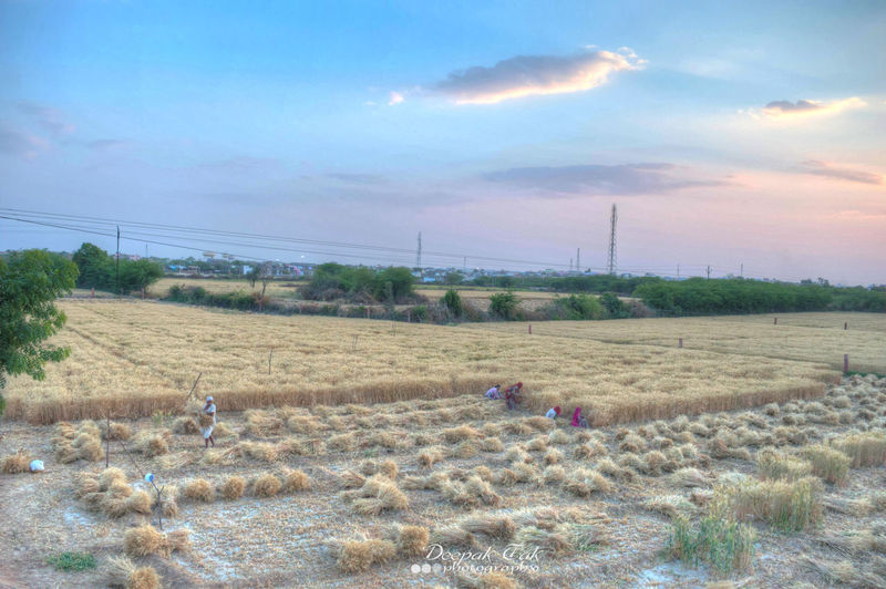 Agriculture Farm Rural Scene Sky Field Nature Growth Cloud - Sky Scenics Outdoors Tree Landscape No People Beauty In Nature Day HDR Plant Landscape_photography Farm Fields Nature Photography EyeEmNewHere Beauty In Nature Agriculture Growth Flying High