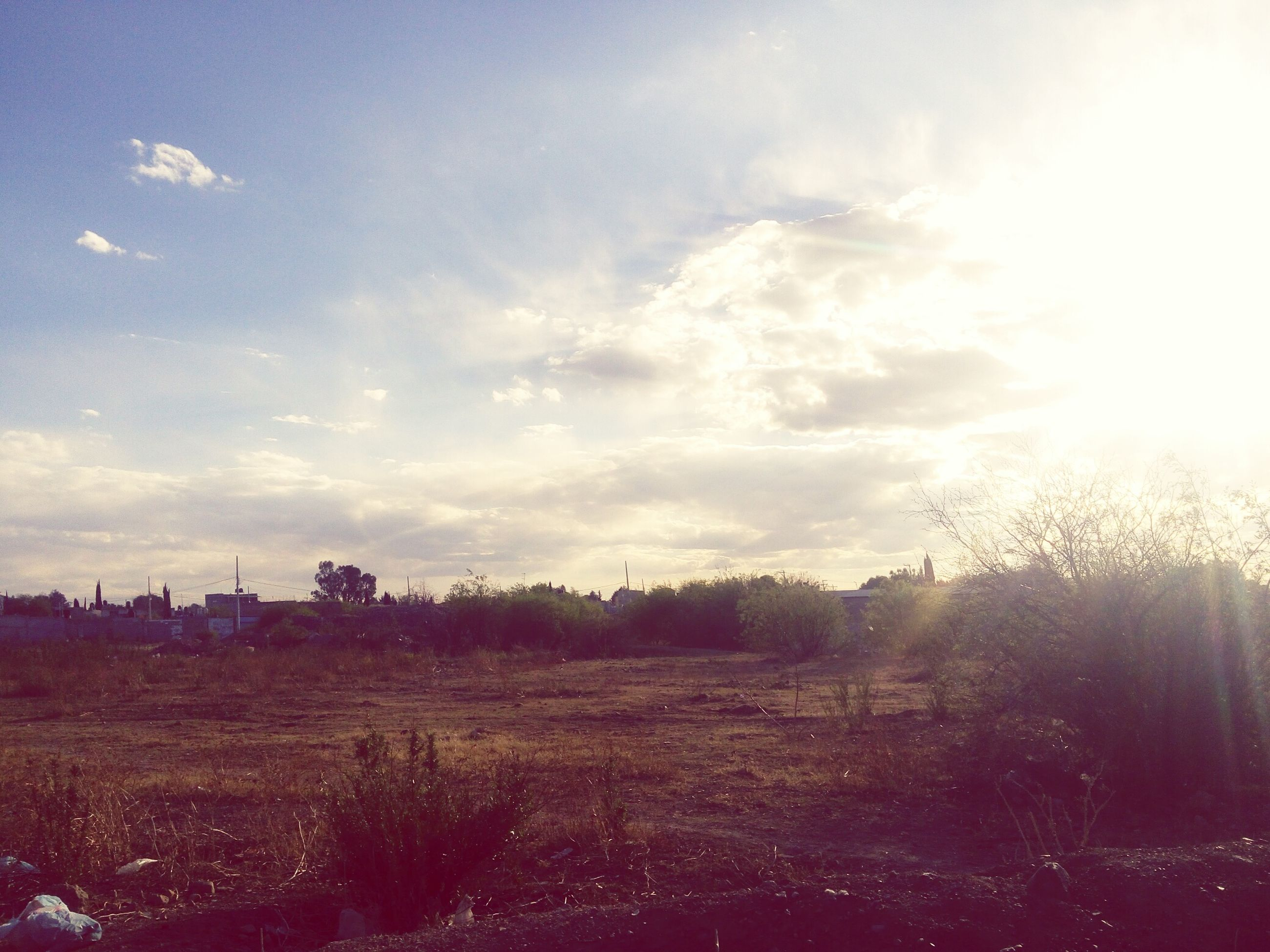 sky, nature, growth, tree, beauty in nature, tranquility, scenics, flower, tranquil scene, sunset, no people, outdoors, cloud - sky, landscape, day