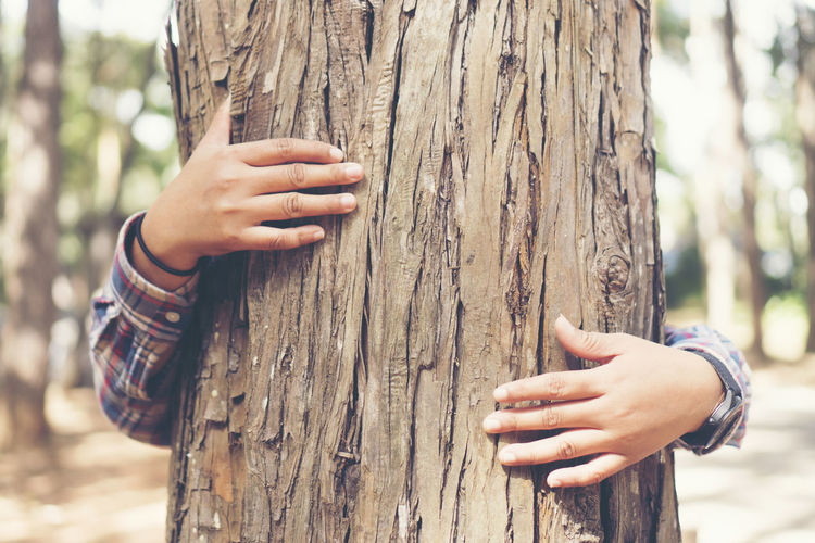 Cropped hands of woman embracing tree