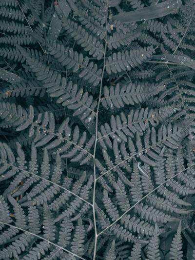 Full frame shot of cracked glass during winter