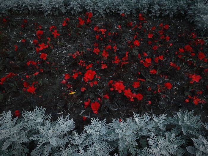Red Winter Snow