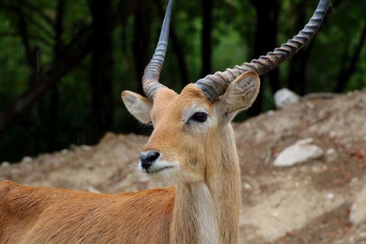 Animal Themes Focus On Foreground Animals In The Wild No People Deer Mammal Day Close-up Nature Outdoors Stag Antler Amazing Summer Detail EyeEm Gallery EyeEm Best Shots Close Up Beauty In Nature Awesome Trip Animal Wildlife One Animal Animals In The Wild Forest