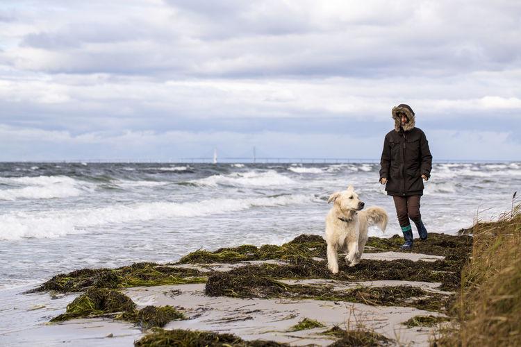 Full length of dog on beach against sky