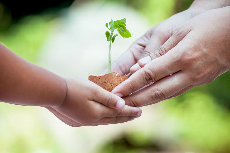 Child with parents hand holding young tree in egg shell together for prepare plant on ground,save world concept Farm Leaf 🍂 Mother Tree Woman Argriculture Botany Childhood Egg Environment Garden Give Growth Holding Human Hand Leaf Nature People Plant Seeding Seedling Shell Two People Women Young Adult