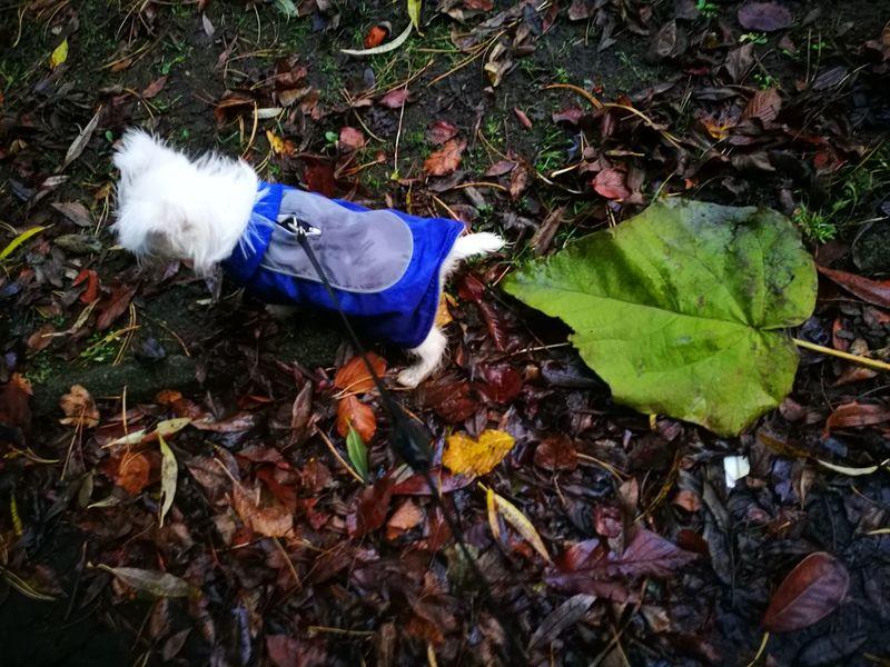 Little dog hudge leaf 🍁🍂autumn 🍂