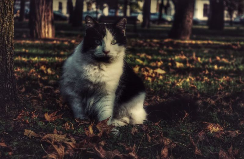 Cat Autumn Taking Photos Enjoying Life