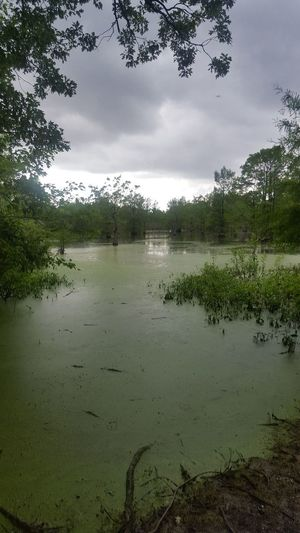 my summer vacation 2017 Streamzoofamily #streamzoo Lake Water Reflection Tree Outdoors Landscape Nature