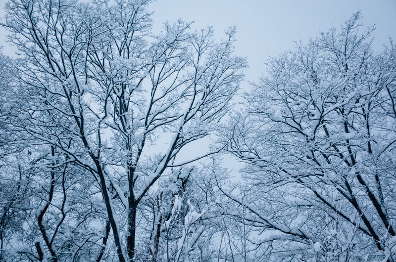 Low angle view of frozen bare trees against sky